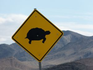 Desert Tortoise Crossing