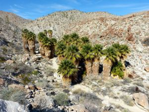 Mtn Palm Springs - North Canyon