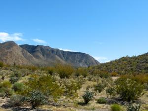 Desertscape 2