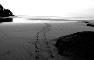 Waikiki Beach .. odd tracks