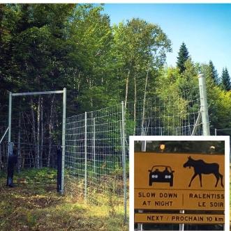 Moose Gate 1